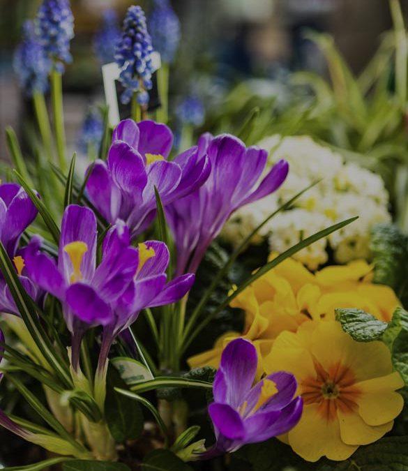 Tungelsta – Med trädgården i fokus